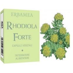 RHODIOLA FORTE 24